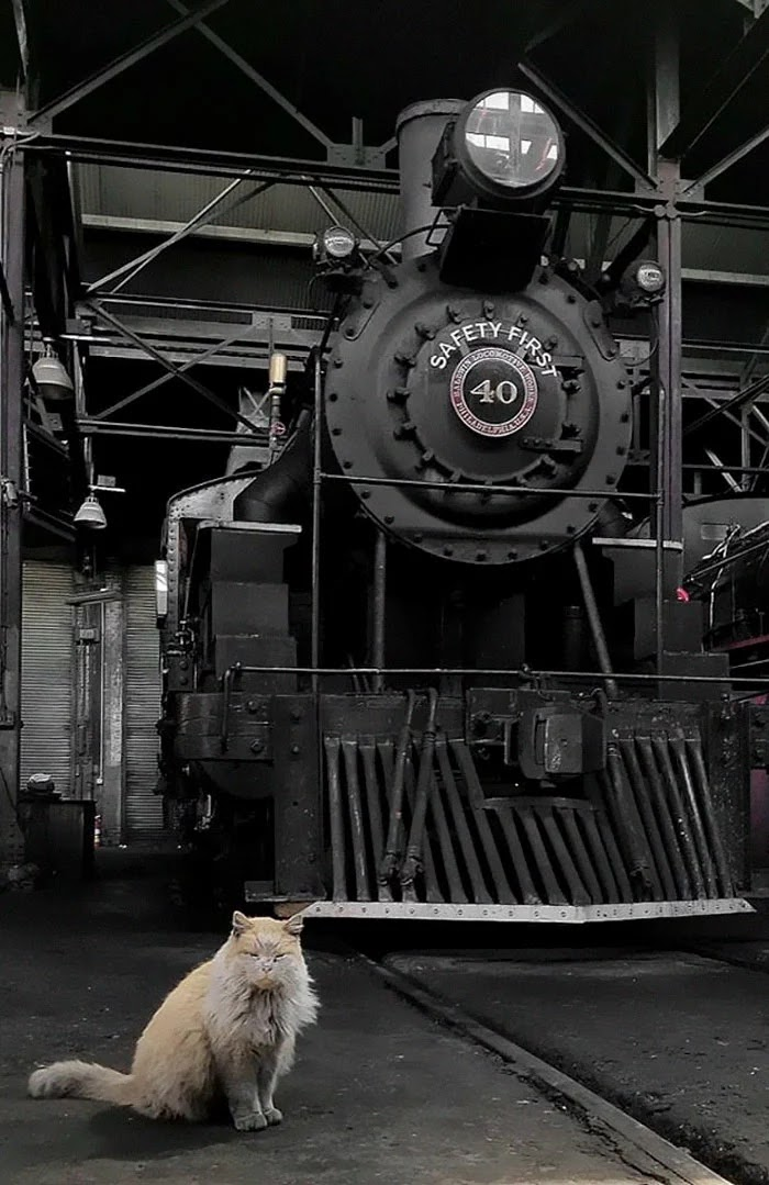 Meet Dirt, The Adorable Nevada Railway Cat That Always Looks Dirty