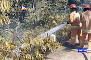 Dua Hektar Hutan Jati KPH Bojonegoro Hangus Terbakar