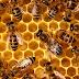 Δυο λόγια για το μέλι