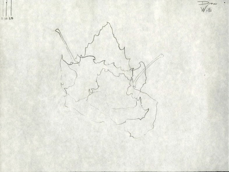 Introduction to the Studio: Drew Wills Line Drawing 1