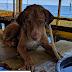 SURVIVOR! Σκύλος που βρέθηκε στα βαθιά σώθηκε