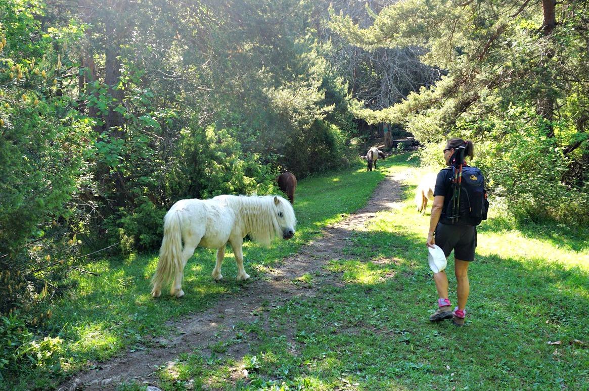Ponies at Baisse de Levens