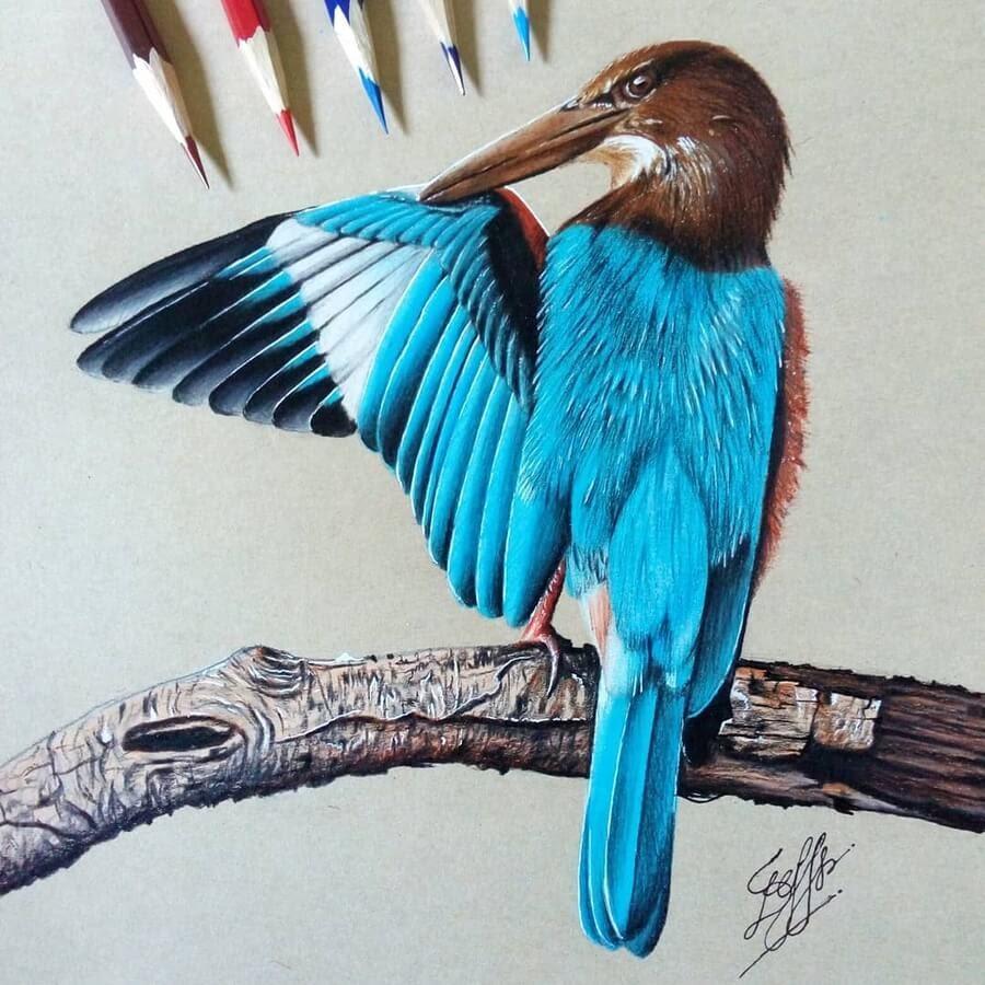 07-Beautiful-feathers-Bele-www-designstack-co