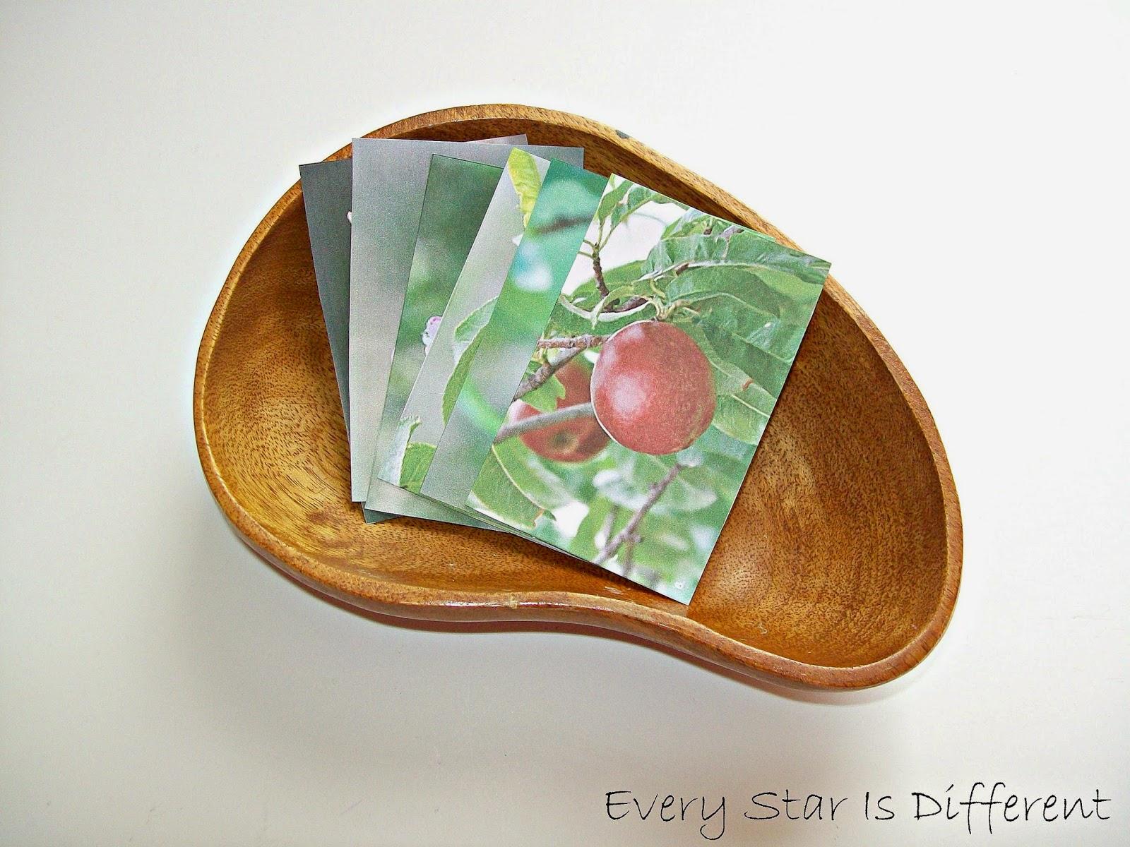 Montessori Inspired Fruit Unit W Free Printables