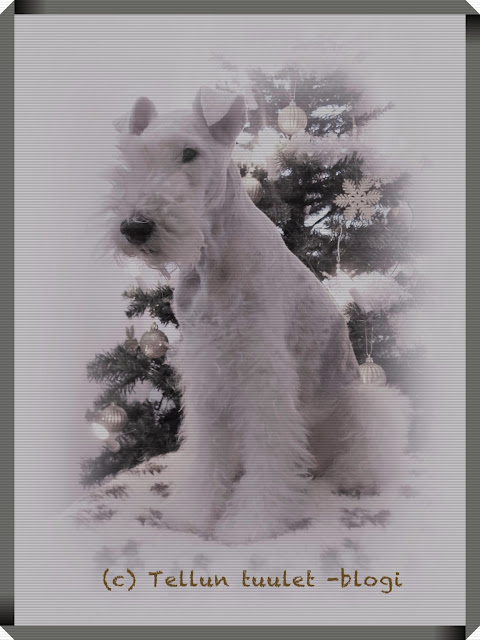 foxterrier christmasphoto