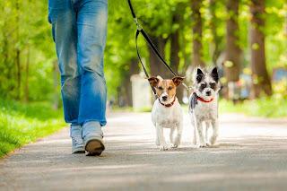 Evcil hayvan bakıcılığı yönemi ile para kazanma