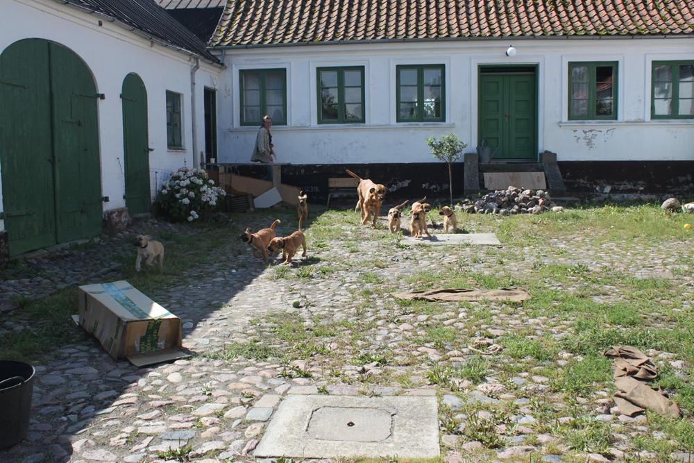 Koiranpennun hakumatkalla Tanskassa 8