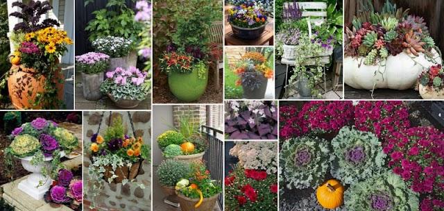Φθινοπωρινά Φυτά & Ιδέες για να τα συνδυάσετε σε γλάστρες