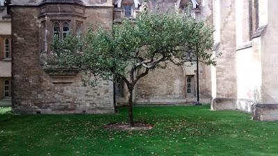 Newton Apple Tree Trinity College
