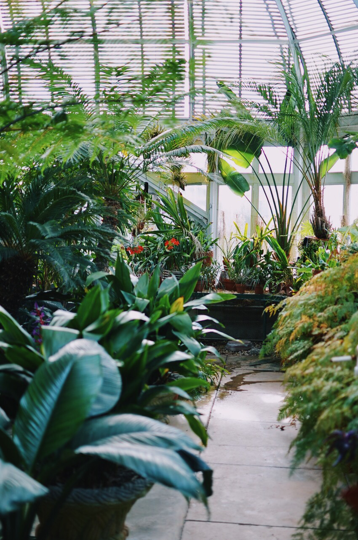 Reynolda Gardens Greenhouse