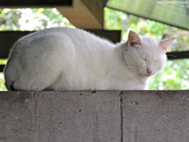 Gato en el Santuario Atago, Tokio