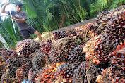 Harga Referensi Crude Palm Oil (CPO) Turun