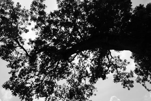 Florida Keys Tree
