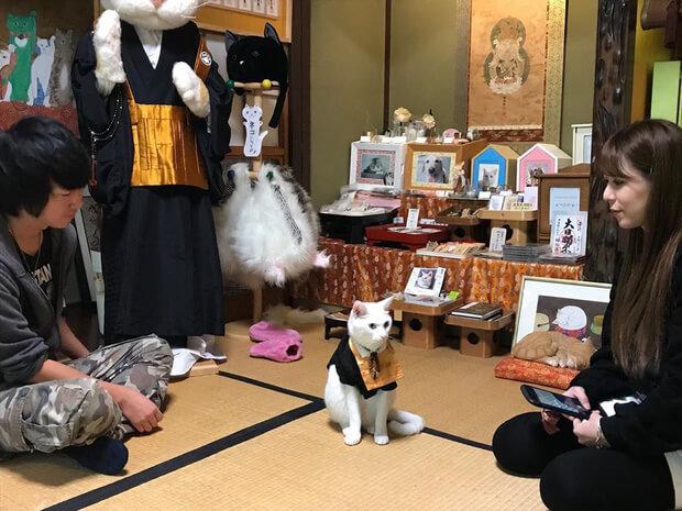 Những người đến thăm đền Nyan Nyan Ji ở Kyoto sẽ được chiêu đãi bởi nhà sư mèo hiện tại là Koyuki. Bên trong đền thờ, du khách sẽ được thưởng thức đồ ăn đồ uống theo chủ đề là mèo.