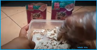 Membuat Makanan untuk Anak Kucing