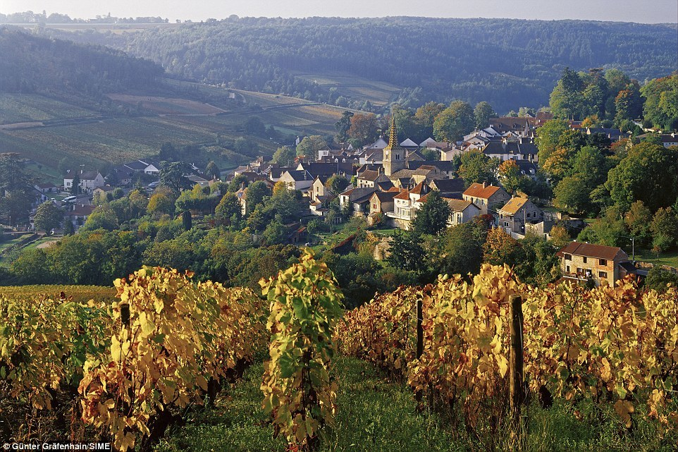 Côte d'Or, Burgundy, France