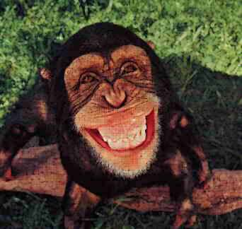 Cute Haunter Wallpaper Image Gallary 7 Beautiful Smiling Monkey Pictures Baby