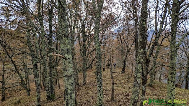 Bosque bajando del Picoretu