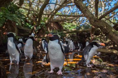 Cena de Nova Zelândia Primitiva - Divulgação Animal Planet