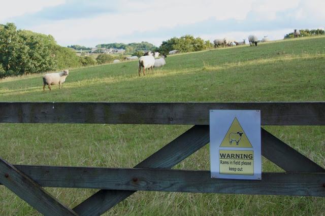 beware of the rams
