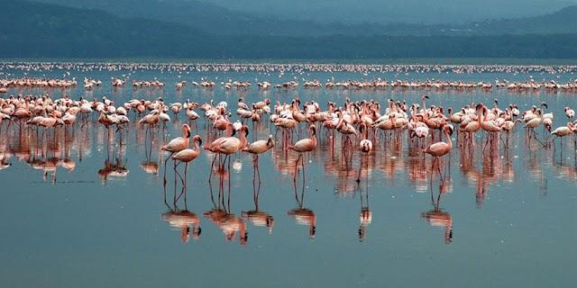 Dünyanın En Büyük Flamingo Kolonisine Ev Sahipliği Yapan Yer Tuz Gölü
