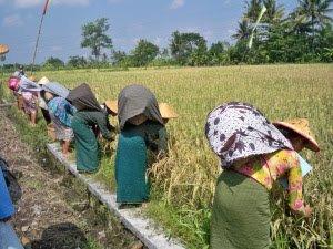 Mekanisme Pengawasan Dana Desa Oleh BPD