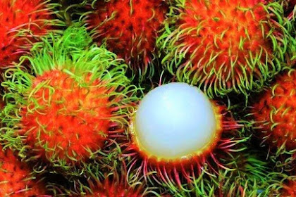 Here are the eight benefits of Rambutan for pregnant women
