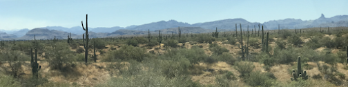 Sonoran Desert, ©PeterMiesler 2019