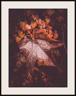 plakat jesień, jesienny plakat, plakat roślinny, plakat z bluszczem, plakat z liścmi, plakat z liściem, plakat A3, plakat pionowy, plakat brązowy liść, plakat brązowe liście