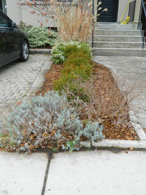 Toronto Front Yard Oakwood Vaughan Fall Cleanup After by Paul Jung Gardening Services--a Toronto Gardening Company