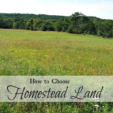 Tips to finding land for your new homestead