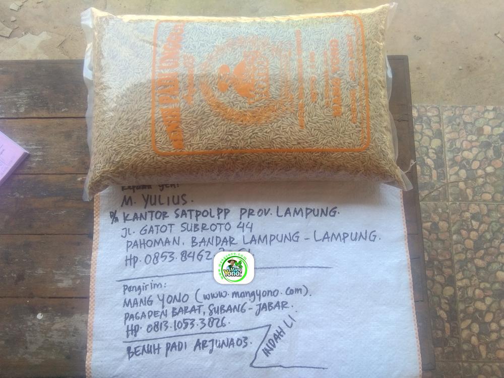Benih Padi yang dibeli   M. YULIUS Bandar Lampung, Lampung.   (Sebelum packing karung).