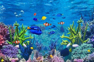 Aquarium Keeping Tips for Beginners:Know Your Lifestyle