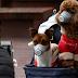 COVID 19 - Pessoas infetadas devem evitar contacto direto com animais de companhia