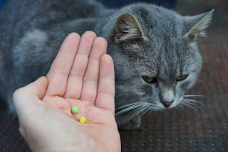 Cómo darle una pastilla a un gato (Humor)