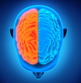 المخ والمخيخ