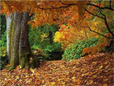 Resultado de imagem para Outono triste da velhice