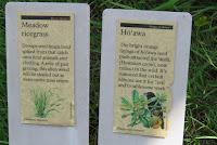 Plant information, Hawaii Volcanoes National Park, HI