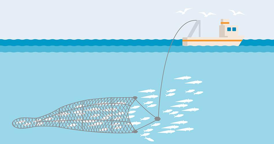 Trawling Fishing method, technique