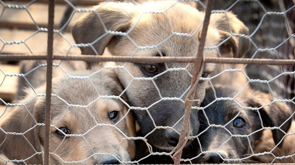 Αυξήθηκε η υιοθεσία κατοικίδιων ζώων εν μέσω καραντίνας