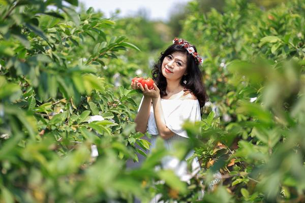 彰化員林阿郎芭樂園享受採蔬果樂趣,還有蜀葵花海和落羽松拍美照