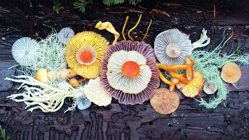 Photographer Captures Colorful Mushrooms in Vibrant Arrangements