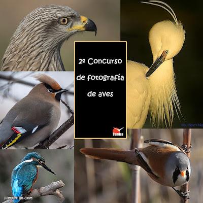 Concurso fotografía de aves El Herrerillo
