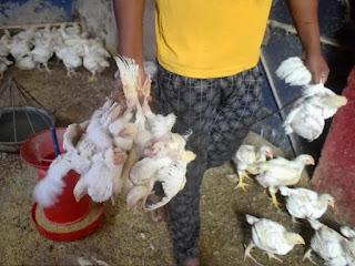 Bird Flu: दिल्ली के ज्यादातर इलाकों में चिकन की बिक्री पर लगी रोक, होटल में परोसने पर भी पाबंदी