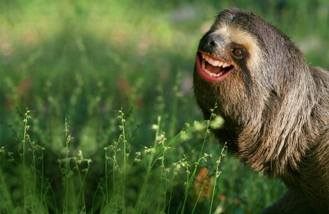 Sloth Lover: October 2011