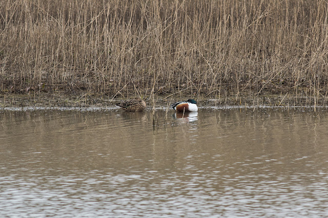 Sleeping Shoveler