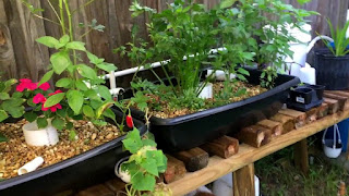 An Aquaponics to build system for fish,source,DIY and gardening
