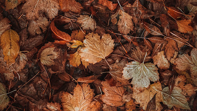 Autumn, fallen leaves, leaves, dry, brown