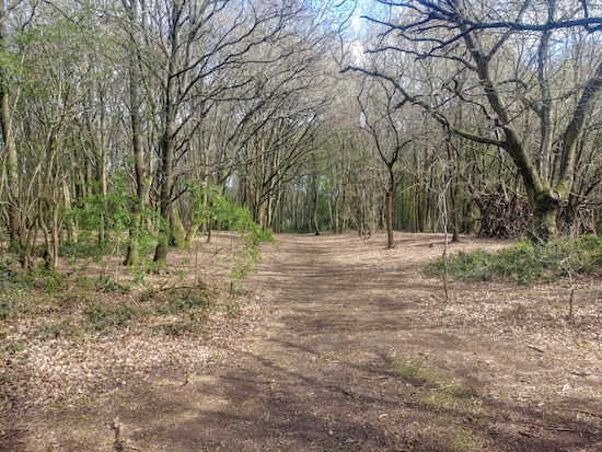 The woodland leading to Dow Green Lane