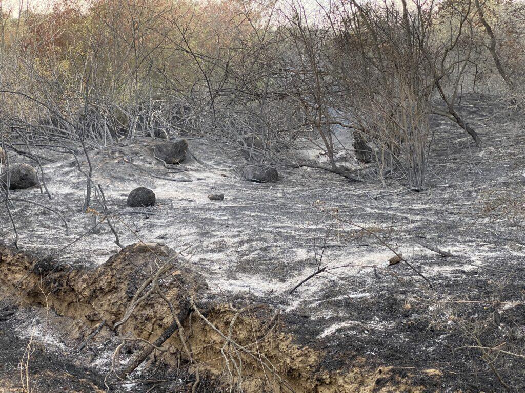 Μάχη με τους ανέμους για τη μεγάλη πυρκαγιά στον Έβρο
